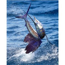 3-Day/4-Night Offshore Fishing - Sailfish, Marlin, Yellow-Fin and Mahi-Mahi  Fishing Trip For Two An