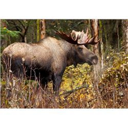 4-Day Moose Hunt for One Hunter in Sweden - Includes Trophy Fee