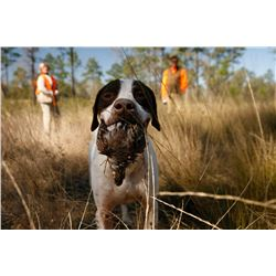 2-Day Bobwhite Quail Hunt for Four Hunters in Georgia