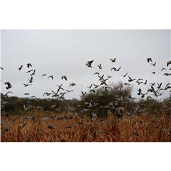 4-Day High Volume Dove Hunt for Four Hunters in Argentina