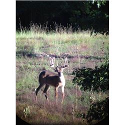 4-Day Whitetail Deer Hunt for One Hunter in Michigan - Includes Trophy Fee