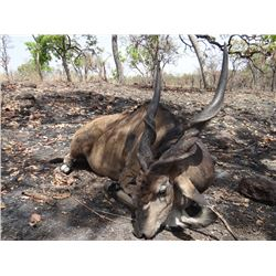 10-12 Day Lord Derby Eland, Savannah Buffalo and Plains Game Hunt for One Hunter in Cameroon