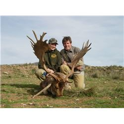 4-Day Fallow Deer Hunt for One Hunter and One Non-Hunter in Spain - Includes Trophy Fee and Sight Se