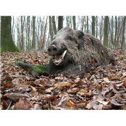 5-Day Fallow Deer, Red Stag and Wild Boar Hunt for Two Hunters in Austria - Includes Trophy Fees