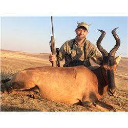 5-Day Plains Game Hunt for Two Hunters in the Limpopo Province of South Africa - Includes Trophy Fee