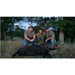 2016 Free Range Spot and Stalk Wild Pig Hunt (1) hunter