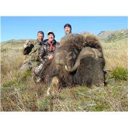 Greenland Muskox Hunt