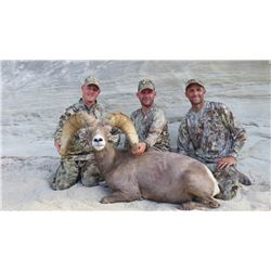 2016 Utah Kaiparowitz Desert Big Horn Sheep Conservation Permit