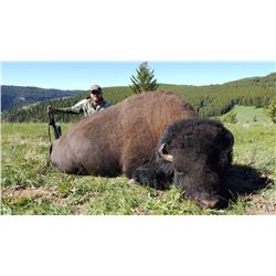 2016 Montana Free Range Buffalo Hunt (1 hunter)