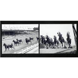 2 Photos - Horse Racing