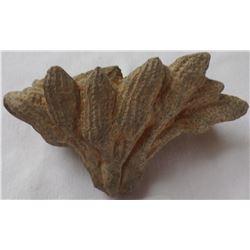 Pre-Columbian Peanut Cluster Carving