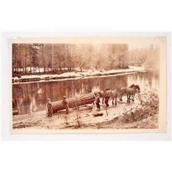 ANTIQUE LOGGING PHOTO - LOGGING W/ HORSES