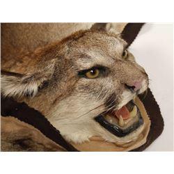 Mountain Lion Hide Rug