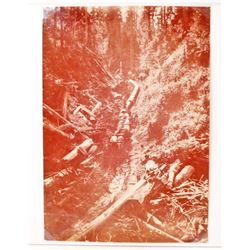 ANTIQUE LOGGING PHOTO OF OX PULLING LOGS DOWN A HILL