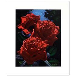 Magenta Roses by  Brian Davis