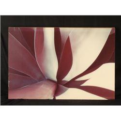 Large Flower Abstract Modern Flower Art Print