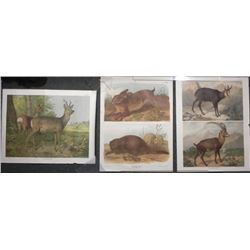 3 Antique Austrian Animal Prints Verlag Carl Gerold