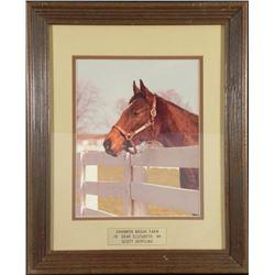 Shannon Brook Farm Scott Serfling Horse Photo Frmd