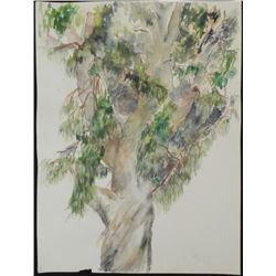 Betty Snyder Rees Original Eucalyptus Tree Painting