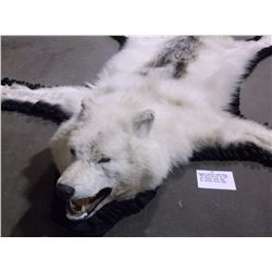 """Double Matted Wolf Rug-78"""" Nose to tip of Tail-64"""" Across Front Legs- 56"""" Across Hind Legs"""