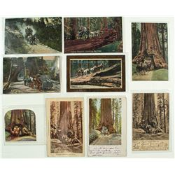 Yosemite and Big Trees Stagecoach Postcards