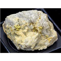 Grass Valley Gold-in-Quartz specimen 2b