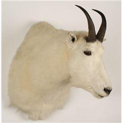 Rocky Mountain Goat Mount