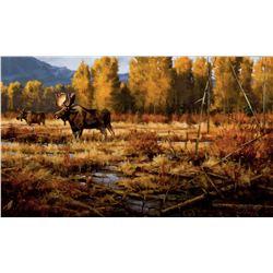 Oxbow Moose
