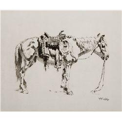 Navajo Pony