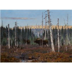 Moose Trekking Through a Clearing