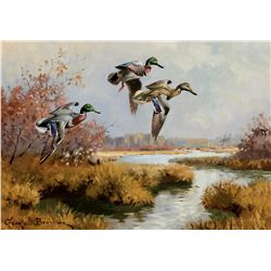 Mallards Drifting In - Field Study