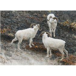 Alaska-Dall Sheep