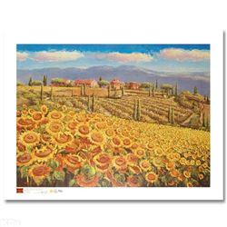 Tuscany Sunflowers By Sam Park