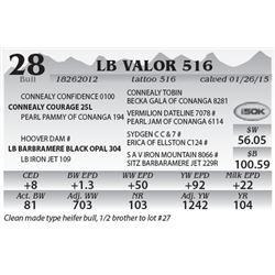 Lot 28 - LB Valor 516