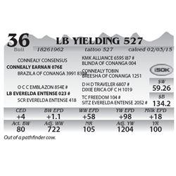 Lot 36 - LB Yielding 527