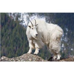 Mountain Goat Hunt