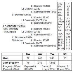 Lot 12449 - L1 Domino 12449