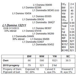 Lot 13211 - L1 Domino 13211