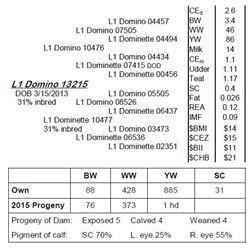 Lot 13215 - L1 Domino 13215