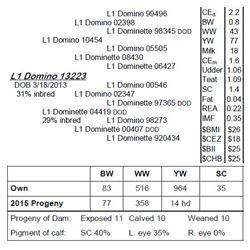 Lot 13223 - L1 Domino 13223