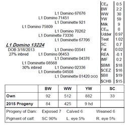 Lot 13224 - L1 Domino 13224