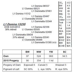 Lot 13235 - L1 Domino 13235