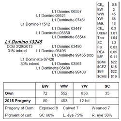 Lot 13245 - L1 Domino 13245