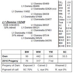 Lot 13249 - L1 Domino 13249