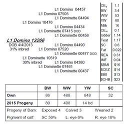 Lot 13266 - L1 Domino 13266