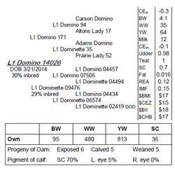 Lot 14026 - L1 Domino 14026