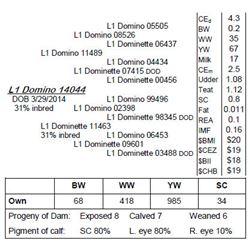 Lot 14044 - L1 Domino 14044
