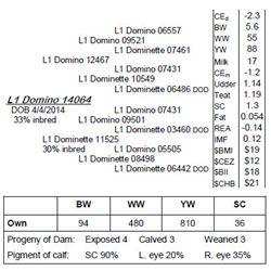 Lot 14064 - L1 Domino 14064
