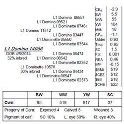 Lot 14066 - L1 Domino 14066