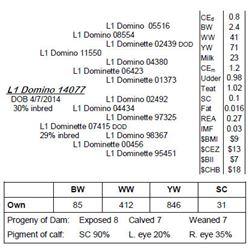 Lot 14077 - L1 Domino 14077